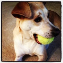 I play fetch with my ball