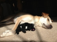 I cuddle with my toy in the sun
