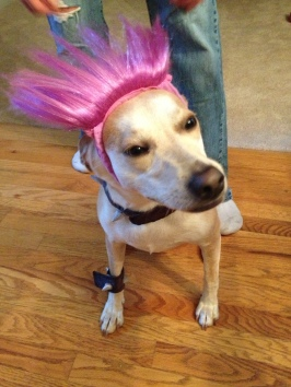 Happy Halloween from the punk rock doggie, Dali!