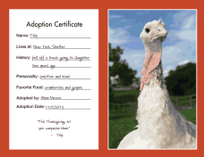Adoption Certificate of Tulip