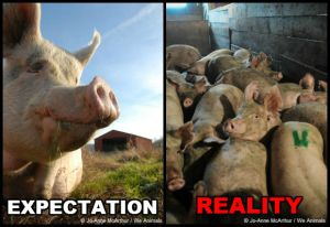 Photo Source: Jo-Anne McArthur on PETA's website