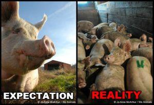 Photo Source: Jo-Anne McArthur on PETA's website