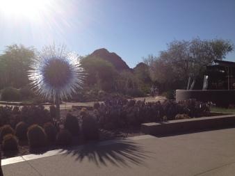 Desert Botanical Gardens 1