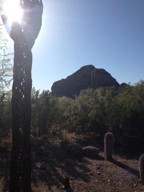 Desert Botanical Gardens 3