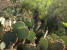 Desert Botanical Gardens 4