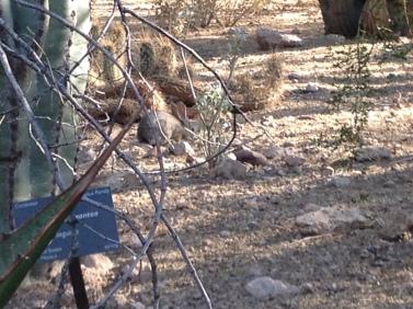 Desert Botanical Gardens 5