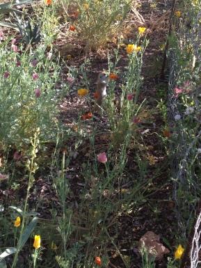 Desert Botanical Gardens 6