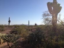 Desert Botanical Gardens 8