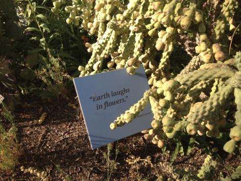 Desert Botanical Gardens 10