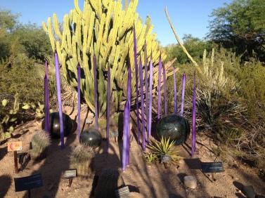 Desert Botanical Gardens 12