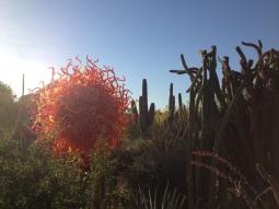 Desert Botanical Gardens 13