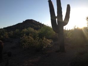 Desert Botanical Gardens 17
