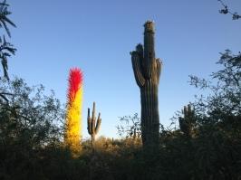 Desert Botanical Gardens 20