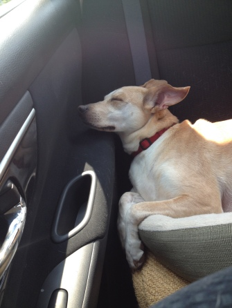 Dali sleeping in car