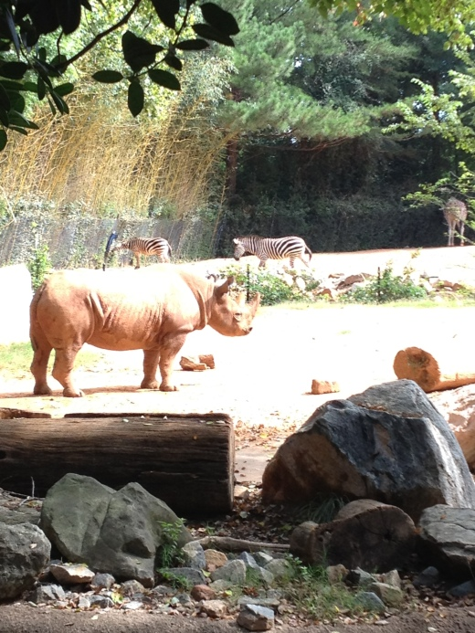 Our visit to the Atlanta Zoo during our pre-vegan days