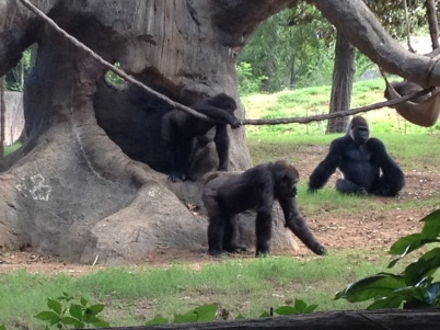 Our visit to the Atlanta Zoo before we knew about animal exploitation at zoos
