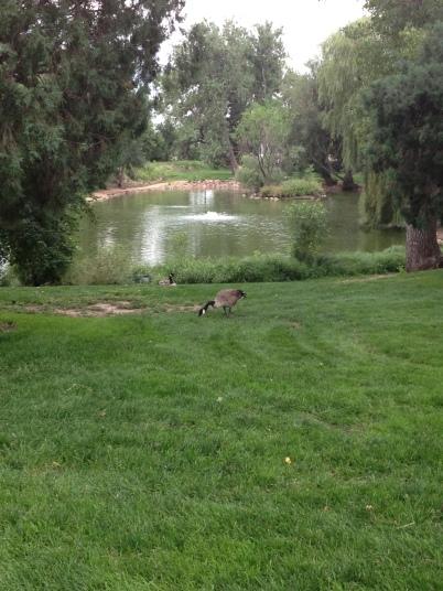 Running Around the Park