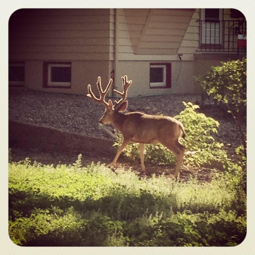 Beautiful Deer During a Morning Run