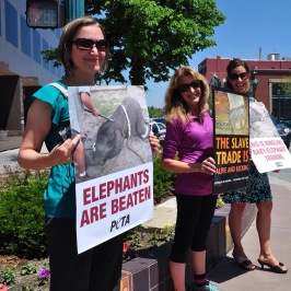 Protesting the circus